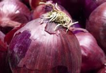 洋蔥擺室內可以吸病菌預防流感