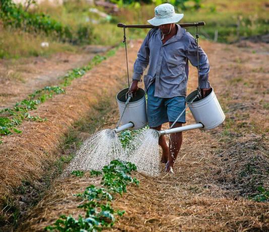 農民賣農產品要登錄