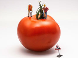 牛番茄不是基因改造作物。(圖片來源:https://pixabay.com)