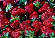 美國公佈十二大最髒水果