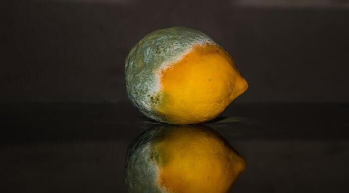 水果只要出現小部份腐爛,就會孳生「鐮刀桿菌」?是真人真事喔!(圖片來源/https://pixabay.com)