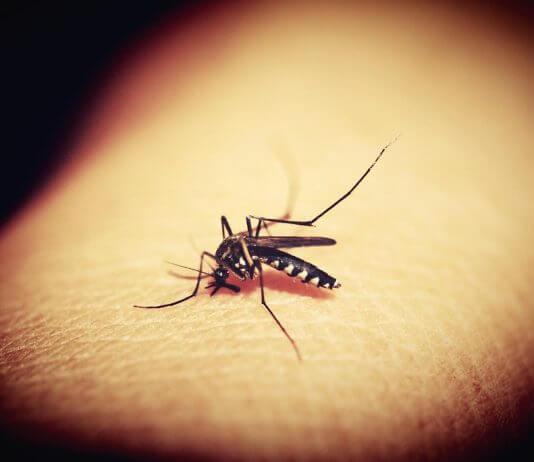 蚊子不怕雨水