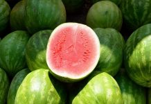 西瓜分公母 ,母的才好吃?看後驚呆了...因為西瓜沒有公母之分啊!!(圖片來源:https://pixabay.com)