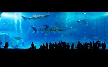 來點Sense/ 沖繩租車 懶人包!新手必看,租車玩遍沖繩超方便(圖片來源:https://pixabay.com)