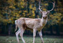 鹿胎盤治療癌症