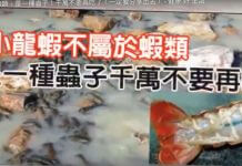 小龍蝦不屬於蝦類 ,是一種蟲子?流傳近十年的謠言,依然不罷休啊!