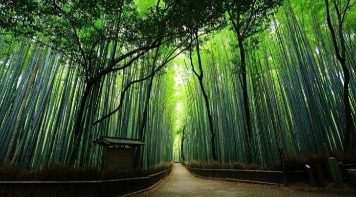 來點Sense/ 京都嵐山 懶人包!嵐山景點、交通都在這~(source by kyotomoyou.jp)