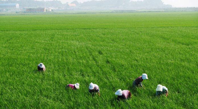 加保農保職災保險