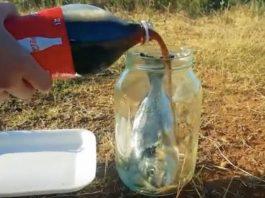 可樂好可怕?一條魚放進可樂中 30天過後不見了!你會泡在可樂裡面30天嗎?(圖/翻攝自Youtube)