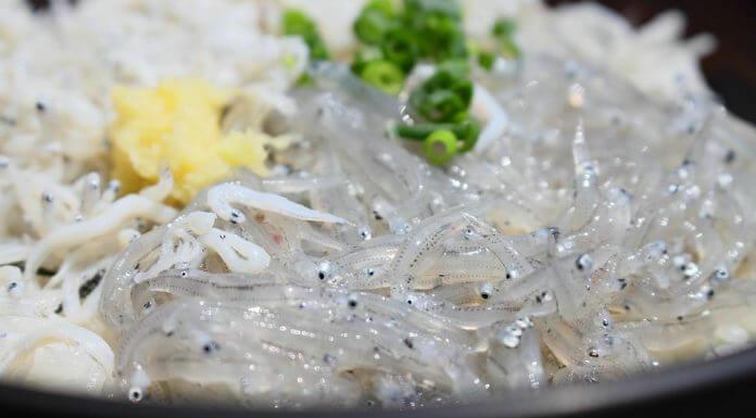 吻仔魚是200多種魚類的幼苗(圖翻攝自網路)