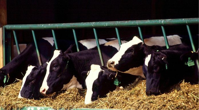 保久乳和鮮乳的差別(圖翻攝自網路)