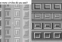 「 沉箱錯覺 」這圖片好夯,聽說看不到圓形就得吃防腦癡的銀杏?這說法錯很大!